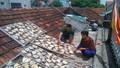 Thanh Hóa: Cá lồng xã đảo Nghi Sơn chết bất thường