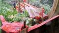 Vụ 'lâm tặc' tàn phá rừng Hóa Sơn: Sự thật bị che giấu