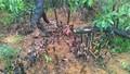"""Tiếp bài hàng chục hecta rừng Hà Tĩnh bị """"triệt hạ"""" trái phép: Cơ quan bảo vệ rừng nói gì?"""