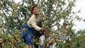 Yên Bái:  Những đột phá trong tái cơ cấu ngành Nông nghiệp