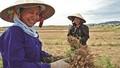 """""""Đũa thần"""" nào gỡ khổ cho lao động nữ ở nông thôn?"""
