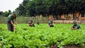 Nông trang đáng mơ ước trong trang trại quân đội