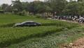 Bắc Ninh: Xe camry đâm 5 người thương vong rồi lao xuống ruộng lúa