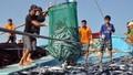 Tìm giải pháp để ngăn chặn việc khai thác hải sản trái phép ở nước ngoài