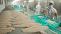 Cá tra sang EU cán mốc 71,9 triệu USD