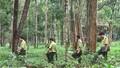 Tây Nguyên: Chậm rà soát, đánh giá kết quả các dự án chuyển đổi rừng