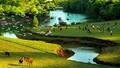 Vườn cò - 'kho báu' du lịch bị bỏ rơi?