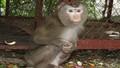 """Nuôi khỉ làm cảnh – không chỉ bị luật  """"sờ gáy"""", mà còn…"""