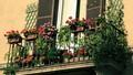 Hương hoa tầng cao
