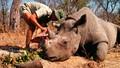 Việt Nam tăng cường thực thi pháp luật về động vật hoang dã