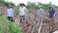 Phú Yên: Hàng loạt cán bộ dính kỷ luật vì liên quan triệt hạ rừng và khan gian bằng cấp