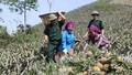 Biên giới ký sự: Bản kết nghĩa đầu tiên trên biên giới Việt - Trung