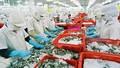 Ngày 26/2, Australia sẽ kiểm tra chuỗi sản xuất tôm tại Việt Nam
