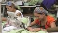 Chấm dứt hợp đồng lao động đối với phụ nữ có thai:  Bị phạt tới 20 triệu đồng