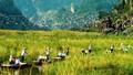 Du lịch sinh thái gắn với nông nghiệp: Làm gì để tạo bước đột phá?