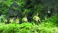 Kiểm lâm Quảng Bình bảo vệ rừng  trước và sau Tết nguyên đán thế nào?