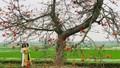 Bình yên mùa hoa gạo tháng 3