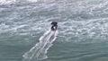 Bị chính quyền phạt vì... cứu cá voi khỏi lưới biển