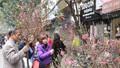 51 điểm chợ hoa xuân phục vụ người Hà Nội dịp Tết Canh Tý