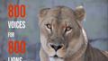 Phát động thi sáng tác nghệ thuật bảo vệ sư tử