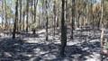 Khống chế đám cháy rừng suốt 3 ngày tại Nghệ An