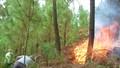 Hơn 30h rừng thông phòng hộ bị lửa thiêu rụi