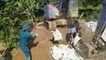Chung tay vào cuộc chống dịch tả lợn châu Phi