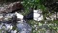 Sạt lở đất đá ở Bắc Kạn, 1 người chết