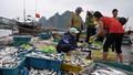 Agribank hỗ trợ khắc phục thiệt hại do thủy, hải sản chết hàng loạt