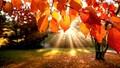 Hãy thả mình vào cảnh sắc mùa thu