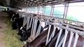 """Trung tâm nghiên cứu bò và đồng cỏ Ba Vì – Hà Nội:  Vi phạm nối tiếp """"vẫn"""" được đảm nhiệm chức giám đốc trung tâm?"""