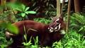 Học sinh tiểu học được học về bảo tồn động vật hoang dã nguy cấp