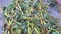 Kinh hoàng rau ngâm chất thải bồn cầu, nấm không rõ nguồn gốc