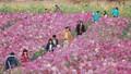 """Những """"hoa hậu"""" ở Thung lũng hoa giữa Thủ đô"""