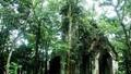 Khám phá những căn biệt thự cổ trong vườn quốc gia Ba Vì