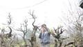 Làng đào Nhật Tân rục rịch chuẩn bị cho vựa đào mới sau tết Nguyên đán