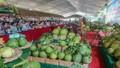 Hậu Giang tổ chức ngày Hội trái cây lần thứ nhất