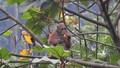Truyền hình Đức làm phim về động vật rừng Phong Nha – Kẻ Bàng