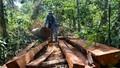 """""""Lâm tặc"""" chém trọng thương hai cán bộ bảo vệ rừng"""