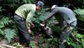 Thả cầy vòi, rùa quý hiếm về rừng tự nhiên Phong Nha