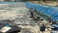 'Mất trắng' 400 triệu đồng sau khi thay nước nuôi tôm