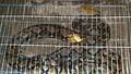 Trăn gấm quý hiếm dài 4m bò vào khu dân cư giữa thành phố để săn gà