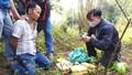Bắt đối tượng người Lào vận chuyển hơn 60 nghìn viên ma túy vượt biên giới