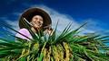 Tìm cách để nông dân cũng được hưởng lương hưu