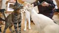 """Mèo nhà có thể là """"ổ"""" chứa virus corona"""