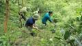 Cán bộ còn lúng túng nên chưa có pháp nhân nào bị truy cứu trách nhiệm khi vi phạm về môi trường