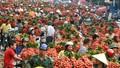 Mấu chốt phải mở rộng thị trường để giảm phụ thuộc vào Trung Quốc