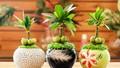 Mách nhau cách đặt cây gì trên bàn làm việc cho hợp phong thủy
