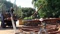 """Lạng Sơn: Nghi vấn """"tráo đổi tang vật""""  trong vụ vận chuyển cây bạch đàn"""