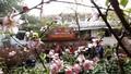 Chợ hoa phố cổ, đi chợ không chỉ để mua hoa